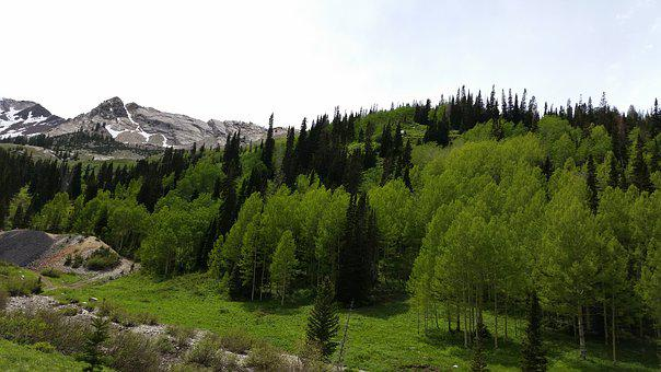 Mountain, Trees, Tailing, Wilderness, Outdoor, Scenic