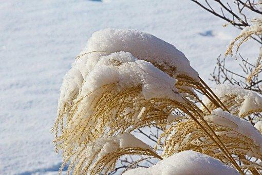 Snow, Grass, White, Landscape, Cold, Winter, Nature