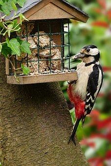 Animal, Bird, Woodpecker, Great Spotted Woodpecker