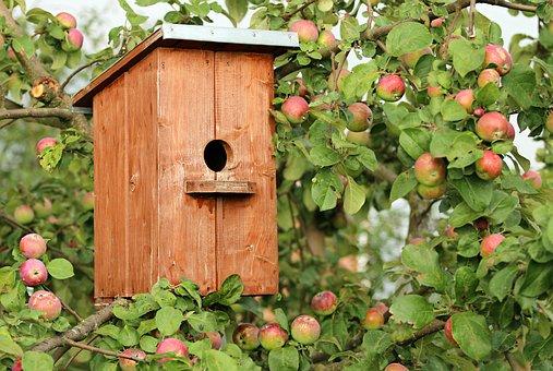 Birdhouse, Cottage, Apple Tree, Jack, Birds, Protection