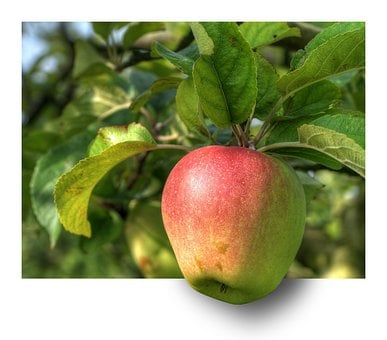 Apple, Fruit, Apple Tree, Hdr, Ebv, Out Of The Frame