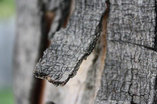 Bark, Tree, Branch, Fray, Stump, Wood, Broken, Rough