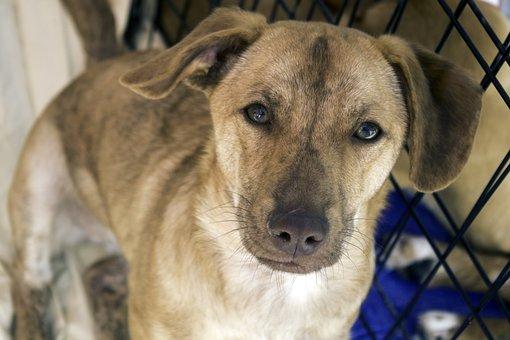 Dog, Mutt, Stray, Pet, Canine, Adopt A Pet, Furry