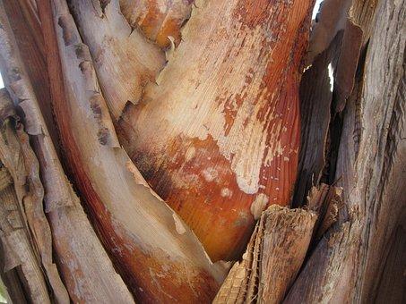 Banana Shrub, Wood, Close, Brown, Structure