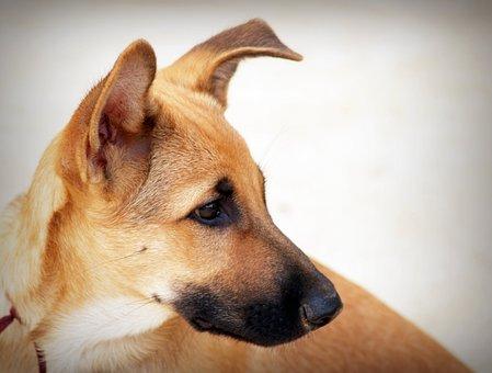 Cute, Dog, Grass, Pet, Collar, Small, Adorable, Lawn