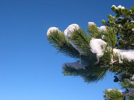 Snow, Branch, Pine, Icicle, Frost, Blue Sky, Sky