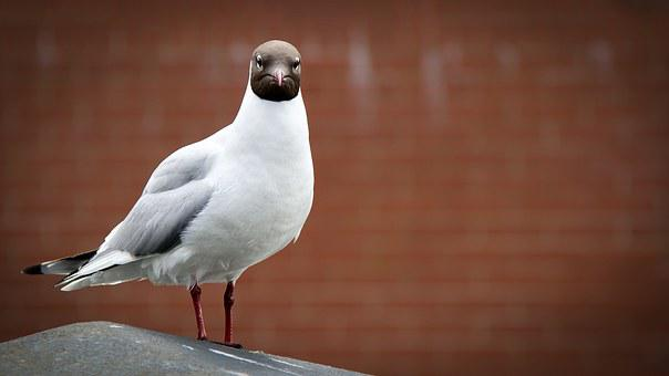 Seagull, Mafia, Criminal, Gull, Bird, Confrontation