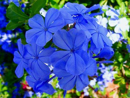 Flower, Blue, Green, Leaves, Nature, Leaf, Life