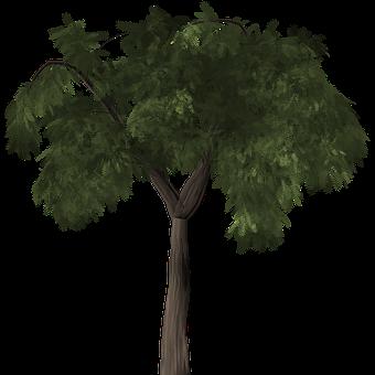 Tree, Pepper Tree, Peppertree, Schinus Molle, Evergreen