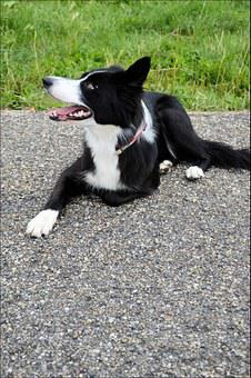 Pedigree, Pet, Dog, Canine, Puppy, Pooch, Growl, Bark