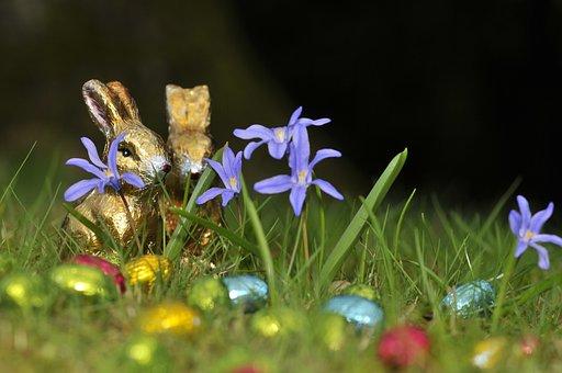 Easter, Hare, Easter Eggs, Grass, Spring, Gold
