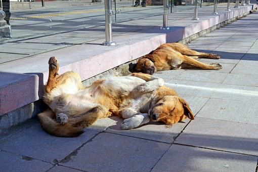Dogs, Sun, Dream, Vacation, City, Mutts, Dog, Street