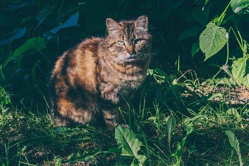 Cat, Animal, Cute, Pet, Kitten, Adorable, Kitty