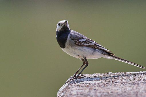 Bird, Sparrow, Sperling, Feather, Garden