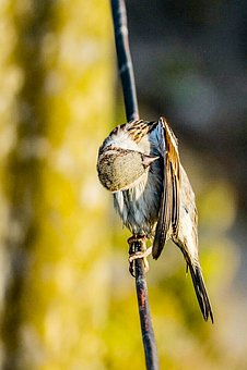 Sparrow, Bird, Wildlife, Branch, Wing, Green, Watching
