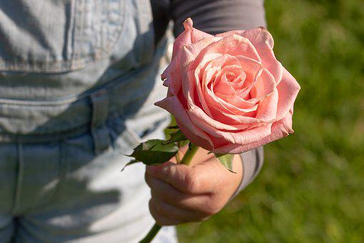 Rose, Child's Hand, Thank You, Child, Flower