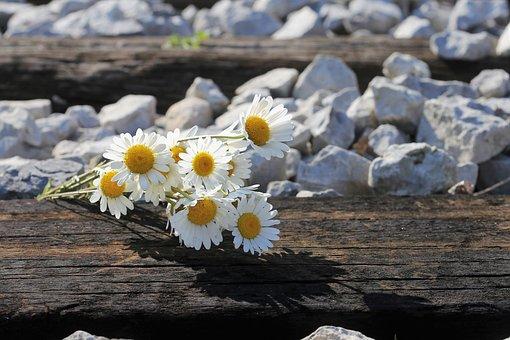 Daisy Bouquet On Railway, Loving Memory, Lost Love