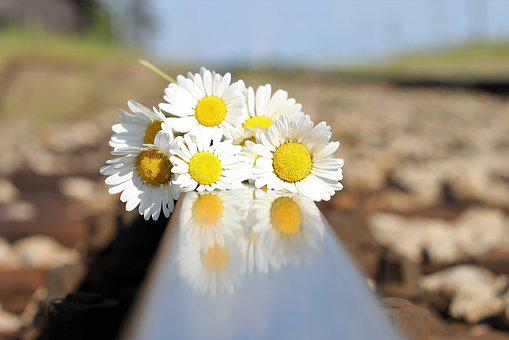 Stop Youth Suicide, Daisy Bouquet On Railway, Tragedy