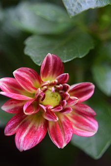 Flower, Nature, Plant, Pink, Leaf, Floral, Macro