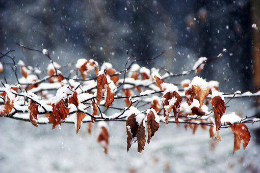 Winter, Autumn, Wintry, Tree, Nature, Close, Forest