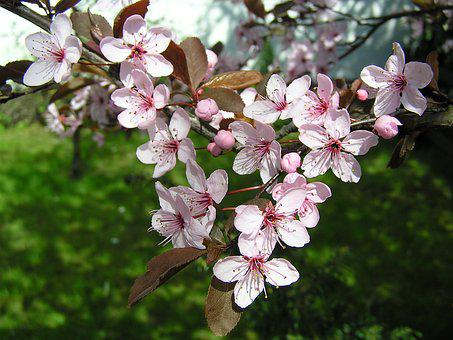Flowers, Trees, Spring, Pink, Nature, Garden