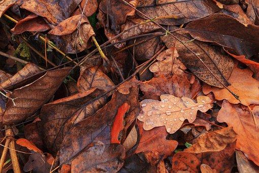 Leaves, Autumn, Drop Of Water, Nature, Golden Autumn