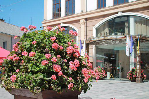 Flowers, Gothel, The Entrance To The Hotel, Gothel Rius