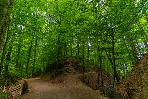 Forest, Nature, Landscape, Trees, Forests, Green