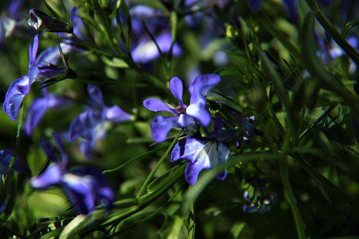 Blue Flower, Garden, Greens, Flower, Summer, Plant