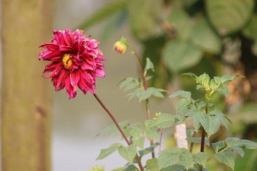 Bangladeshi Nature, Indian Nature, Nature
