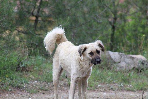 Dog, Mom, Puppy, Sad, Nature, Kastamonu