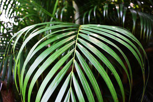 Green, Leafe, Green Leafe, Plant, Summer, Nature