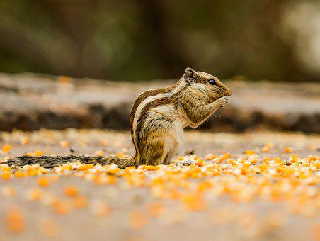 Squirral, Animal, Mammal, Cute, Eating, Posing