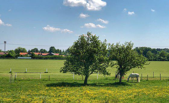 Meadow, Horse, Coupling, Animal, Nature, Animal World