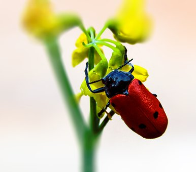 Beetle, Insect, Flying, Small, Nature, Arthropod