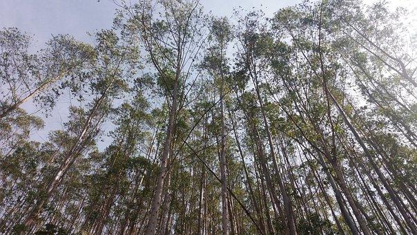 Brazil, Saw Mantiqueira, Pure Air, Landscape, Nature
