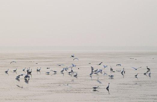 Morning, Paradise, Birds, Lake, Egret, Migratory Birds