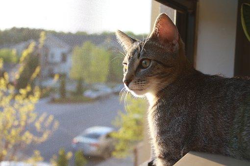 Cat, Pet