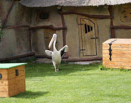Pink Pelican, Animal World, Pelikan, Water Bird, Bill