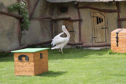 Pink Pelican, Water Bird, Pelikan, Bill