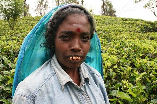 Sri Lanka, Asia, Woman, Tea, Plantation, Tea Plantation