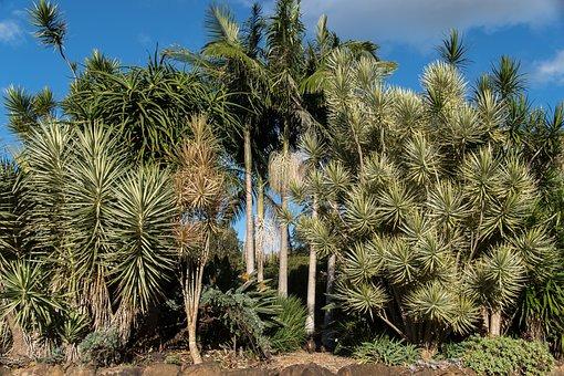 Garden, Trees, Sub-tropical, Green, Spikey, Sunny
