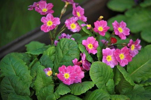 Flower, Garden, Nature, Plant, Summer, Botanical Garden