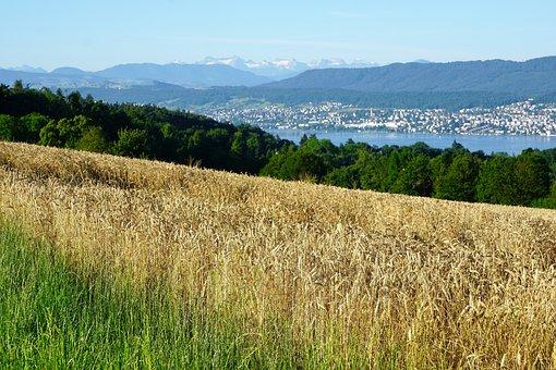 Zollikon, Switzerland, Swiss, Nature, Zurich, Canton