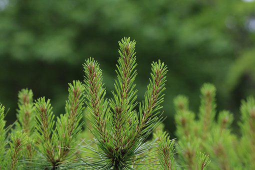Spring, Bud, Nature, Takeshi, Plants, Tabitha