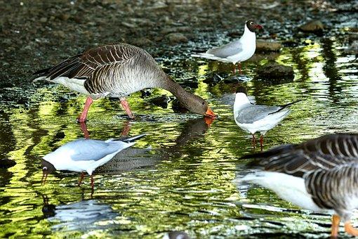 Bird, And, Lake, Water, Animal, Wild, Nature, Wildlife