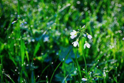 Rosa, Grass, Wet Grass, Drops, Green, Raindrops