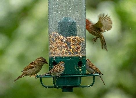 Birds, Bird Feeder, Feeder, Wildlife, Animal, Food