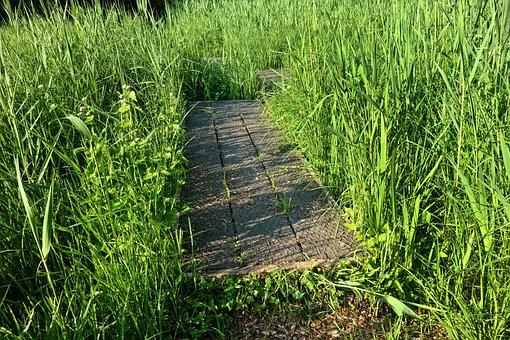 Board Walk, Wood, Planks, Crossing, Marsh, Mesh, Wire