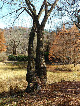 Wood, Autumn, Nature, Quarter, Park